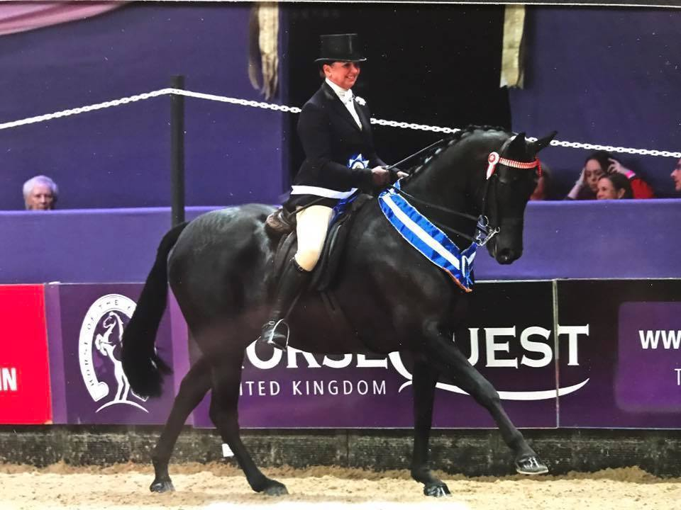Success at HOYS2017 for Snuggy Hoods
