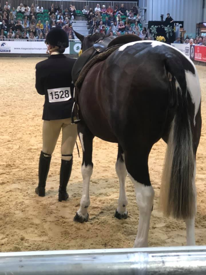 Snuggy Hoods Breeches in action at HOYS