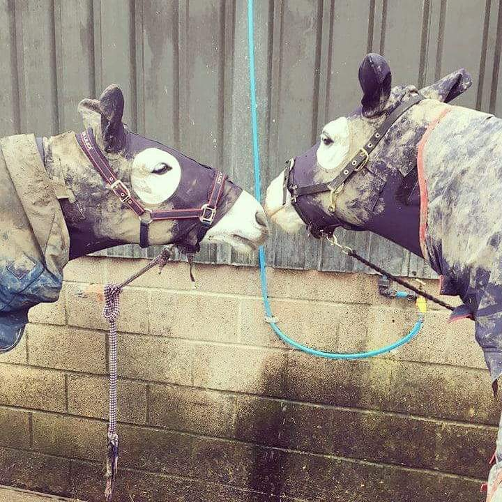 Struggling with your muddy Horse & Pony? Let us HELP