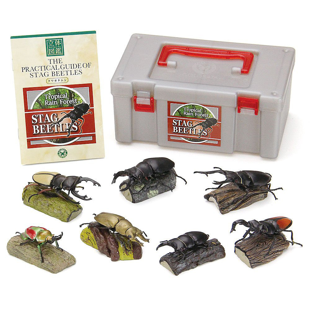 Tropical Rain Forest Stag Beetles Real Figure Box Colorata Japan