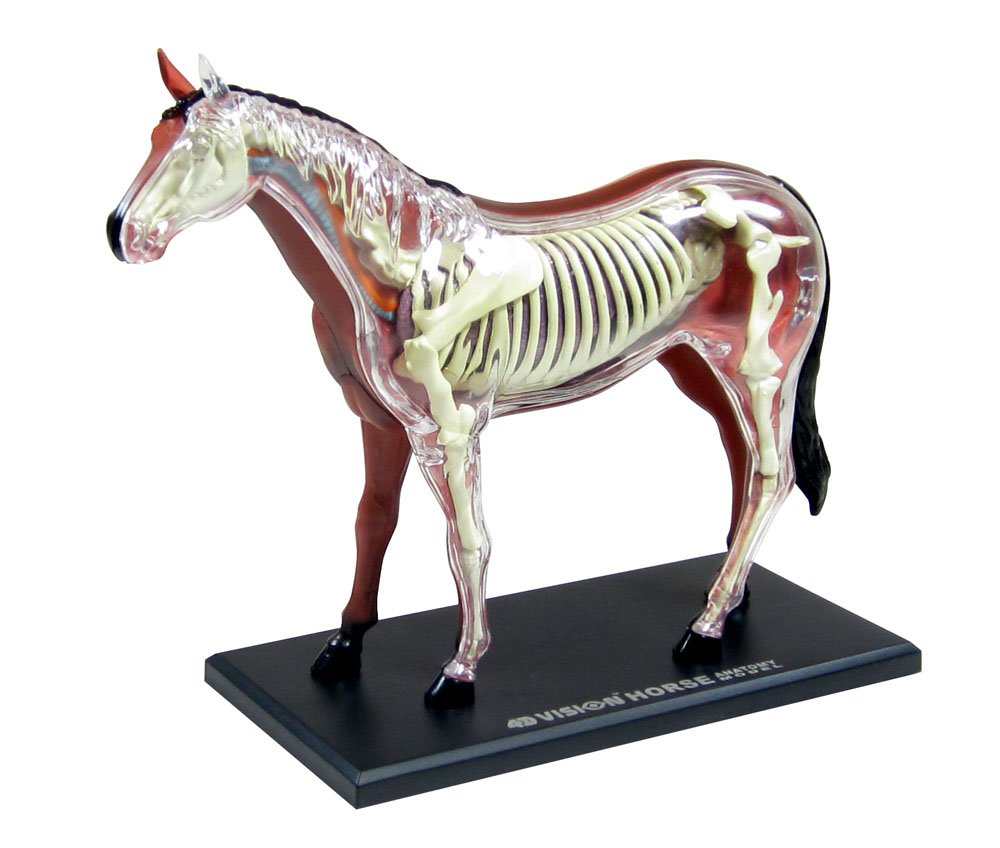 Figure Puzzle 4D VISION No. 04 Horse Anatomy Model AOSHIMA Japan