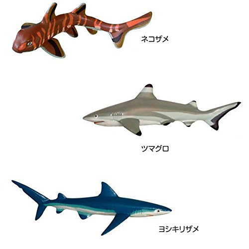 Sharks of the World Figure Box Colorata Japan