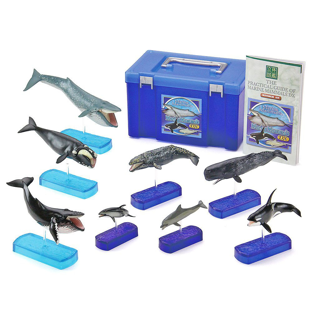 Marine Mammals DX Whale Dolphin 8pcs Real Figure Box Colorata Japan