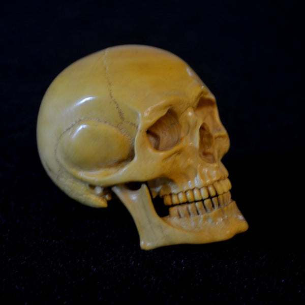 French Boxwood skull with jaw