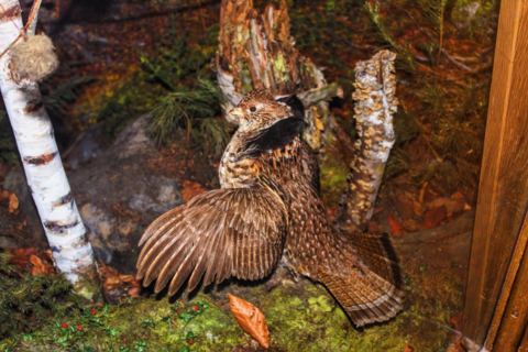 South Jersey's Wildlife Needs Your Help: Bobwhite Quail and Ruffed Grouse