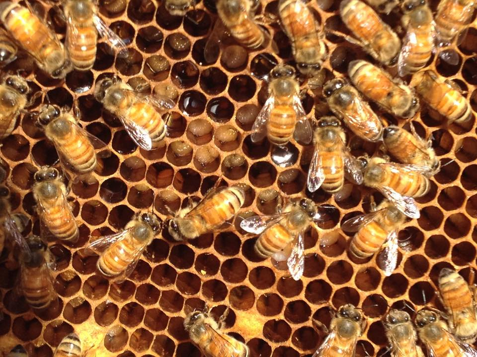 Beginner Beekeeping - 2 Hour Intensive Workshop