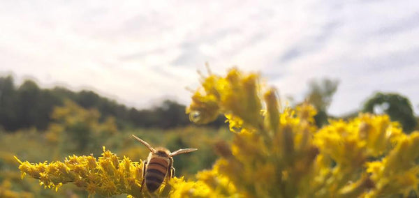 Beginner Beekeeping - Intensive Online Workshop