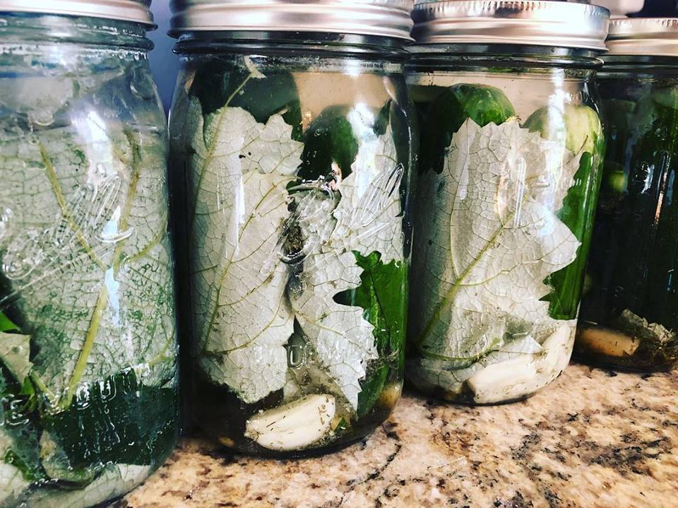 Homemade Pickles, Sauerkraut, & Other Fermented Foods - 90 Min Intensive Workshop