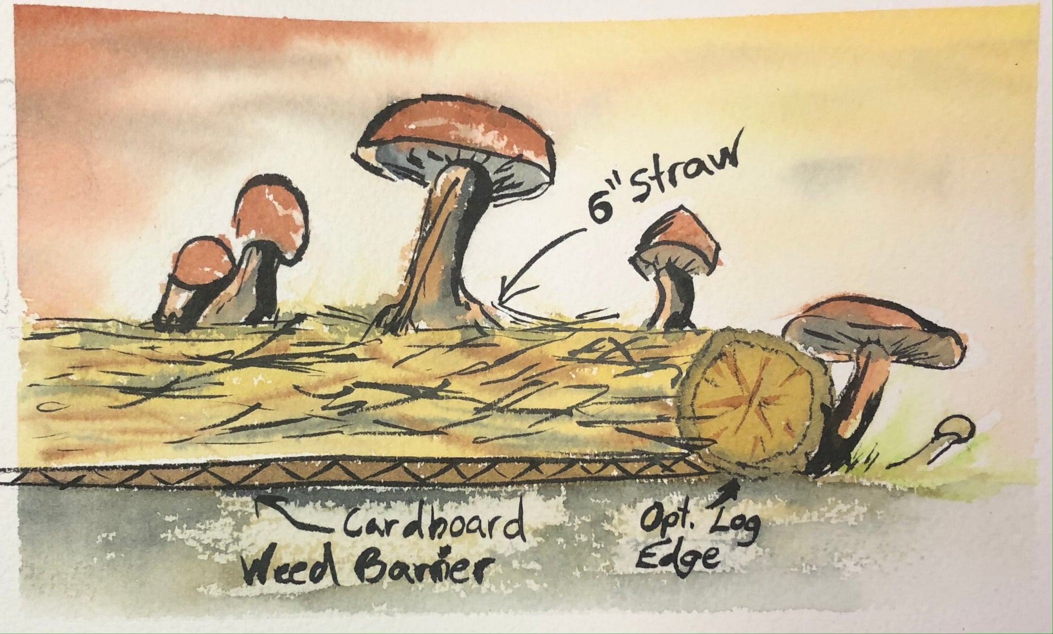 Mushroom Master Course - Growing Outdoors 4+hours of content!