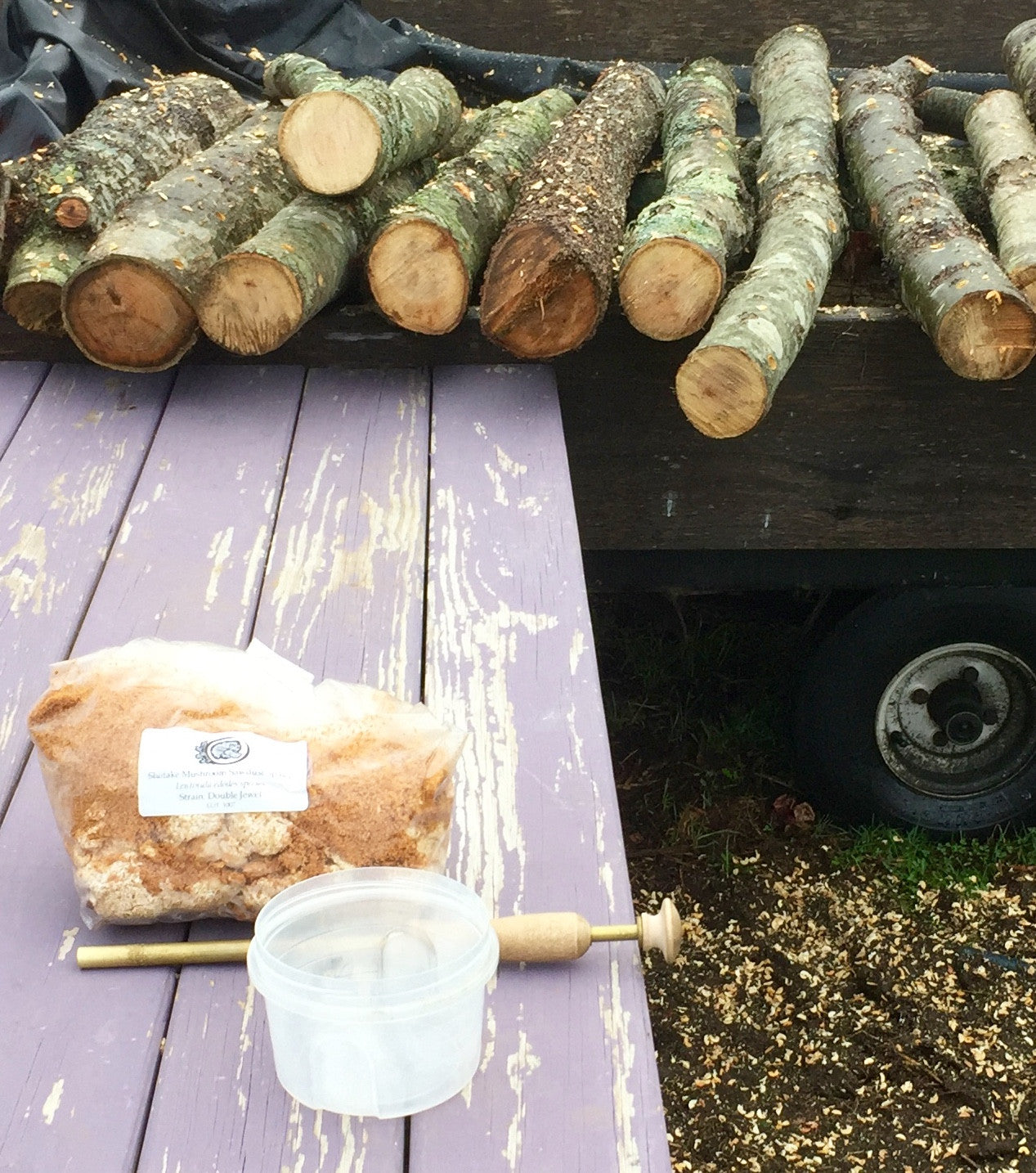 Fresh Shiitake Mushroom Logs - will fruit next year