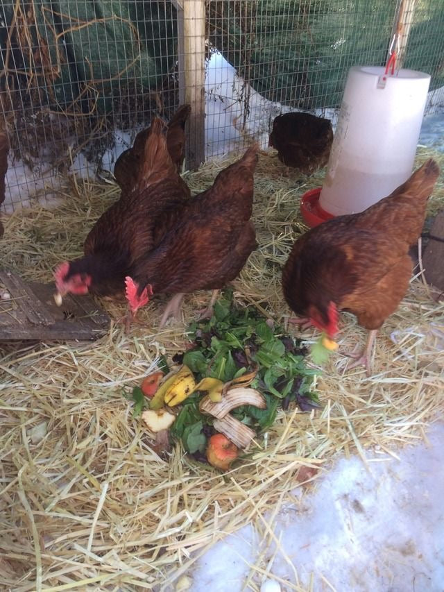 Private Zoom Event: Backyard Pasture Raised Meat Production - Intensive Workshop