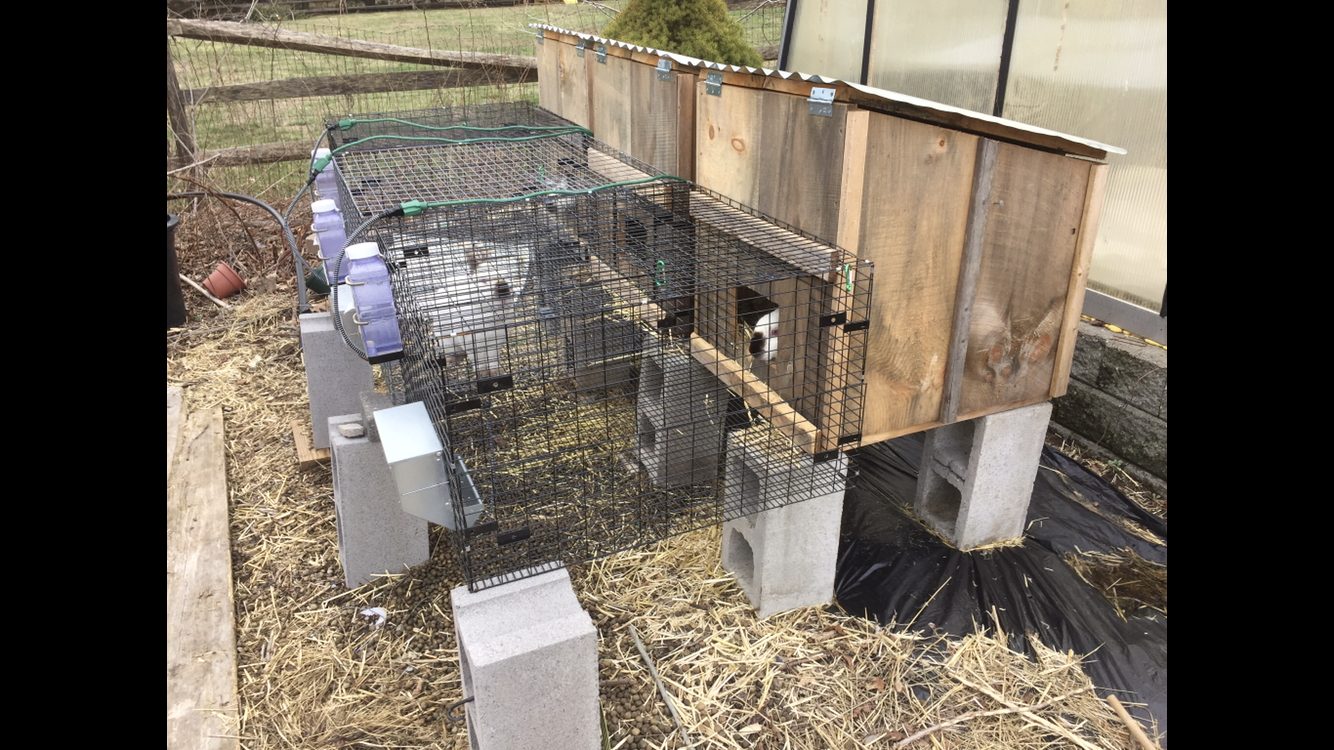 Rabbit Breeders' Bundle - 3 Hutches & 2 Tractors