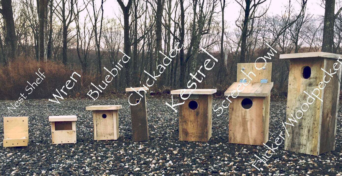 """XBox"" Bluebird House (swallows, titmice, & flycatchers too)"