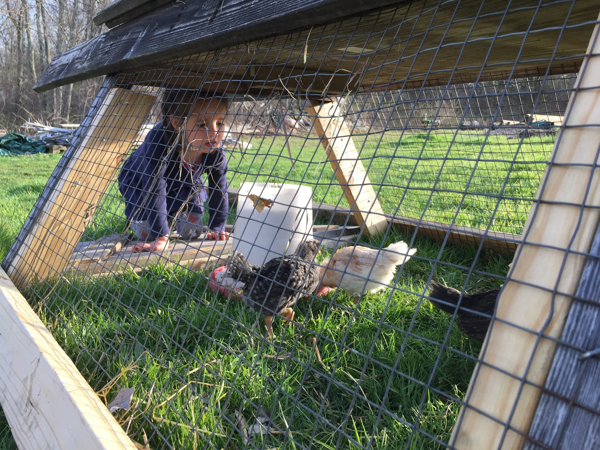 ONLINE Class! - Backyard Chickens for the Whole Family - 90 Min Intensive Online Workshop