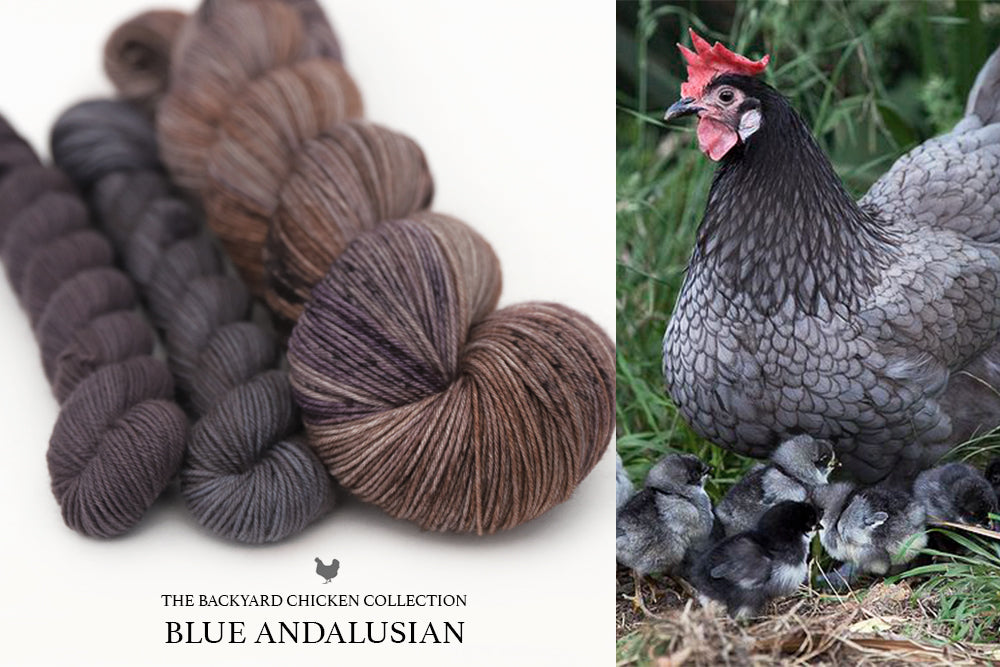 Blue Andalusian Hen