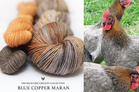Blue Copper Maran Hen