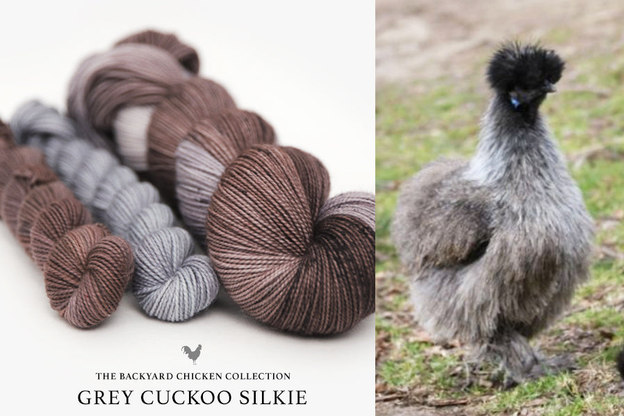 Grey Cuckcoo Silkie Rooster
