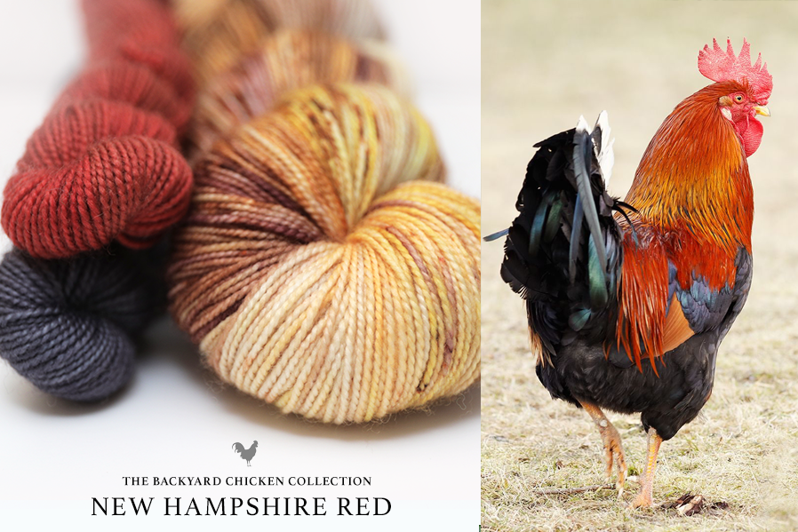 New Hampshire Red Rooster