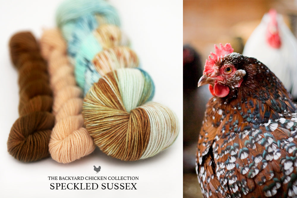 Speckled Sussex Hen