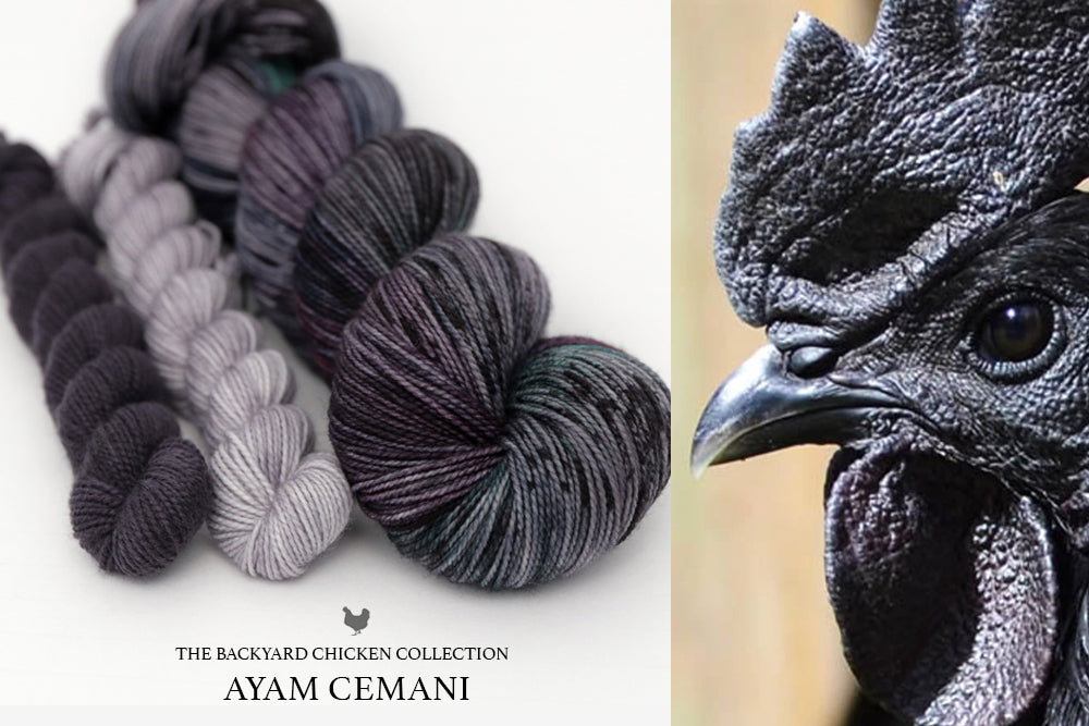 Ayam Cemani Rooster