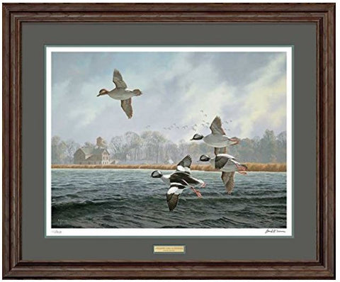 Buffelhead Duck Decoys Art Prints