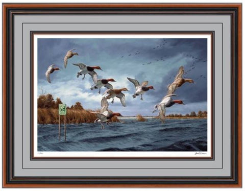 Canvasback Ducks Art Prints