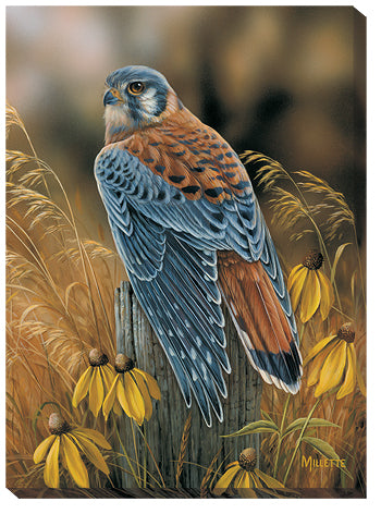 Shop for Wildlife Art