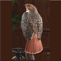 Red Tailed Hawk For Sale