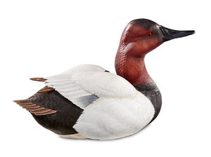 Duck Decoys | Canvasback by Sam Nottleman