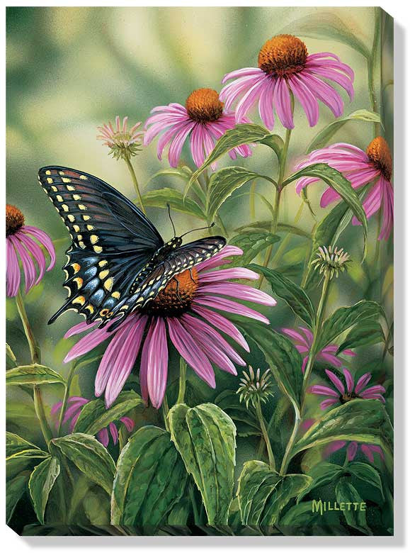 Art | Wrapped Canvas Art Black Swallowtail Butterfly  by R. Millette