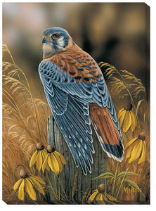 Art | Wrapped Canvas Art Kestrel Falcon Wildlife