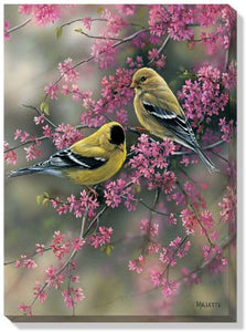 Art | Wrapped Canvas Art Goldfinch & Redbud by Rosemary Millette
