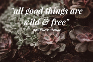 """all good things are wild & free"""