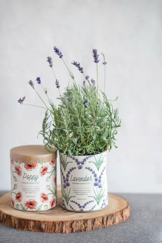 lavender and poppy grow kit indoor