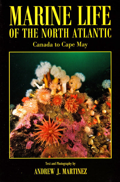 Marine Life of the North Atlantic, Canada to Cape May