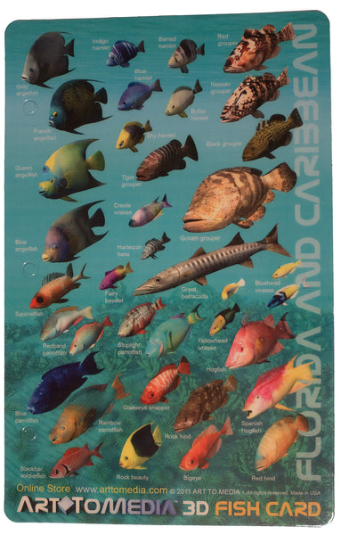Art To Media Fish Identification Card Florida and Caribbean