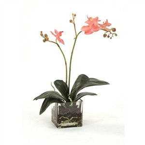 Rose-Pink Phalaenopsis Orchid Plant in a Square Glass Vase - GDH | The decorators department Store