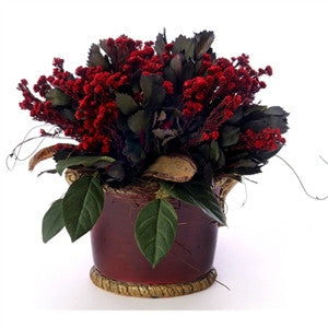 Red Phylica and Winter Eye - GDH | The decorators department Store