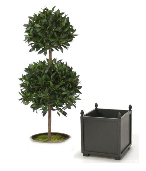 5' Sweet Bay Laurel Double Topiary in Square Wood Planter