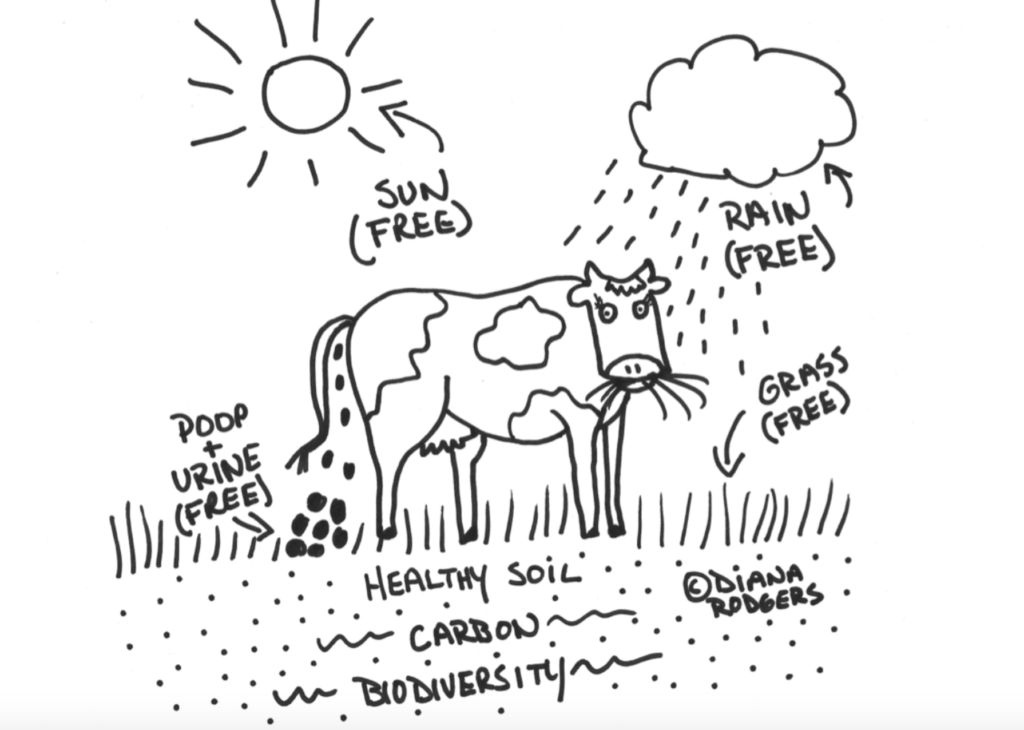 Regenerative Agriculture soil building with cows