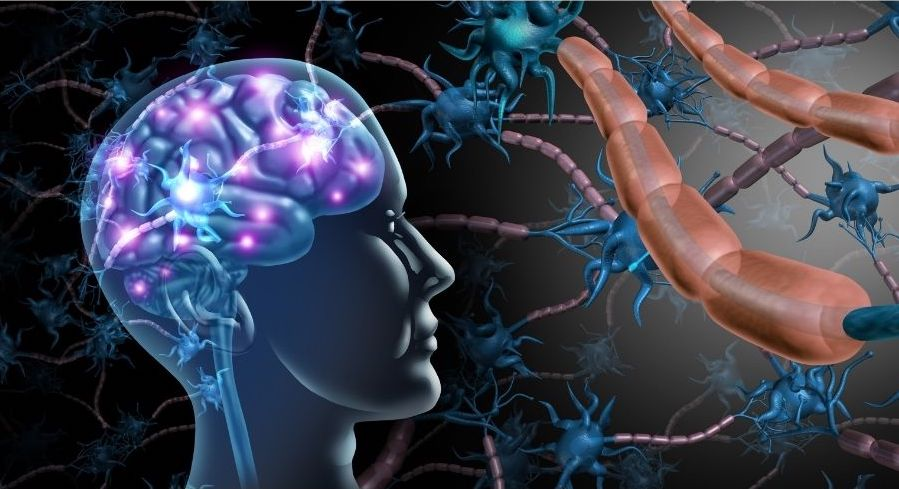 vagus nerve and the gut brain connection