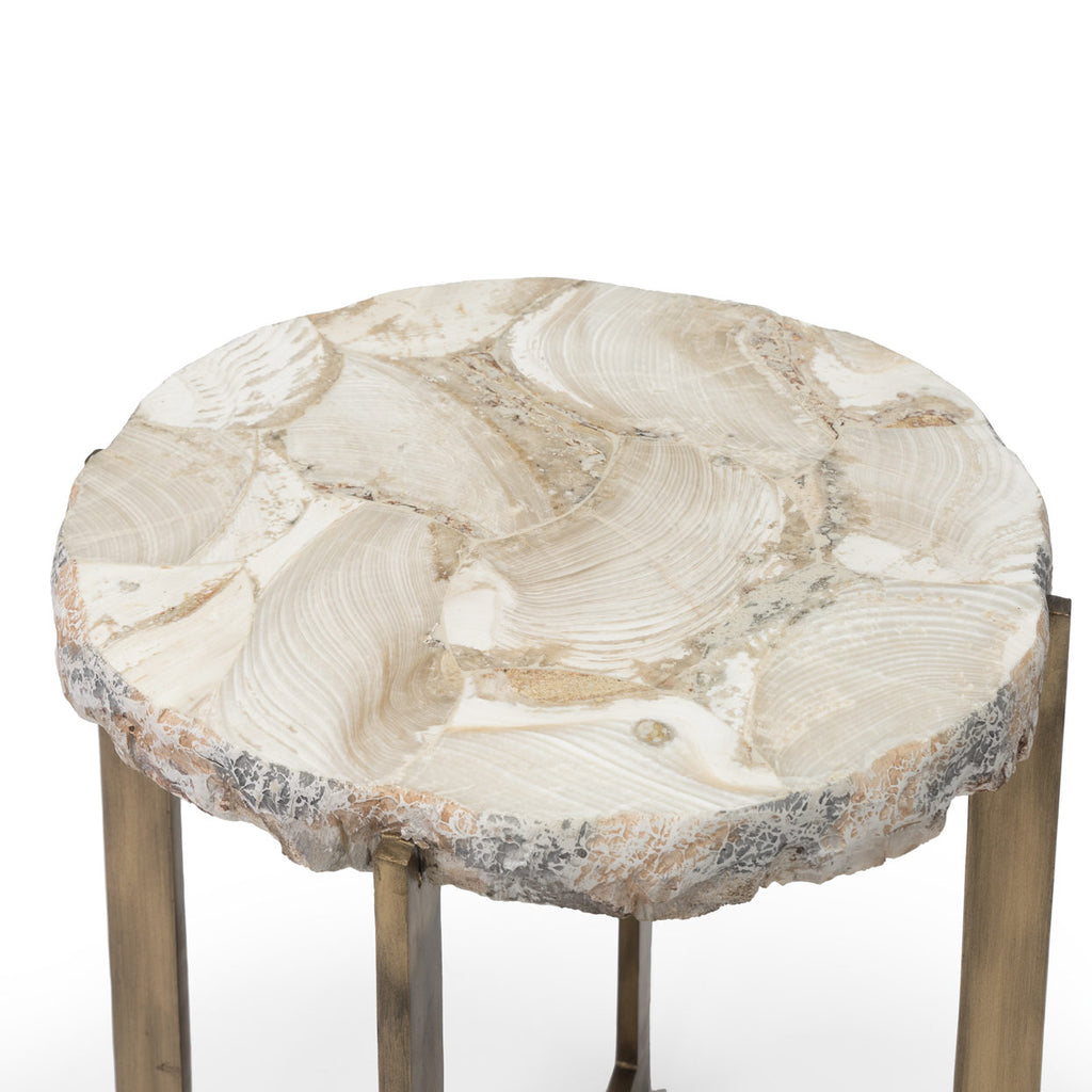 Durham Fossilized Clam Side Table