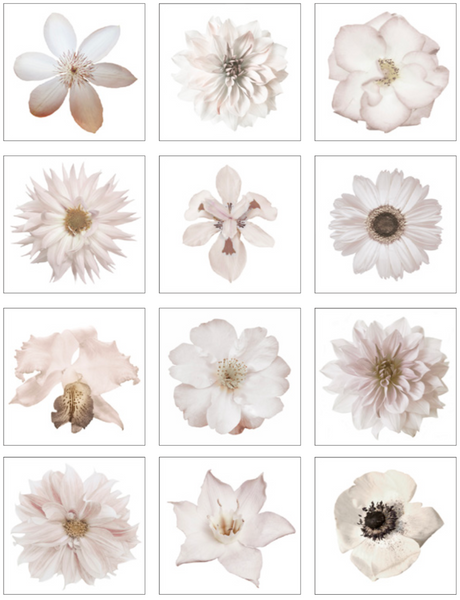 White Flower Art Set of 12
