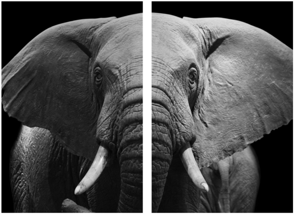 Split Face Elephant