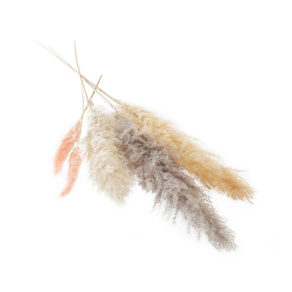 Dried Pampas Grass