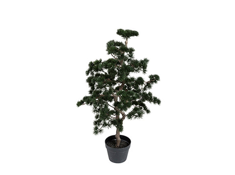 Bonsai tree green