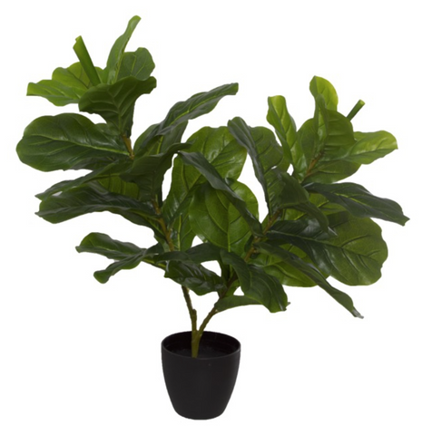 Ficus Pandurate Real Touch Potted Plant Green (65cmH)