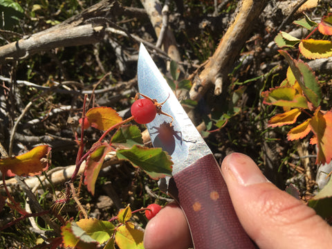 Fiddleback Fish and Fowl Knife with berries