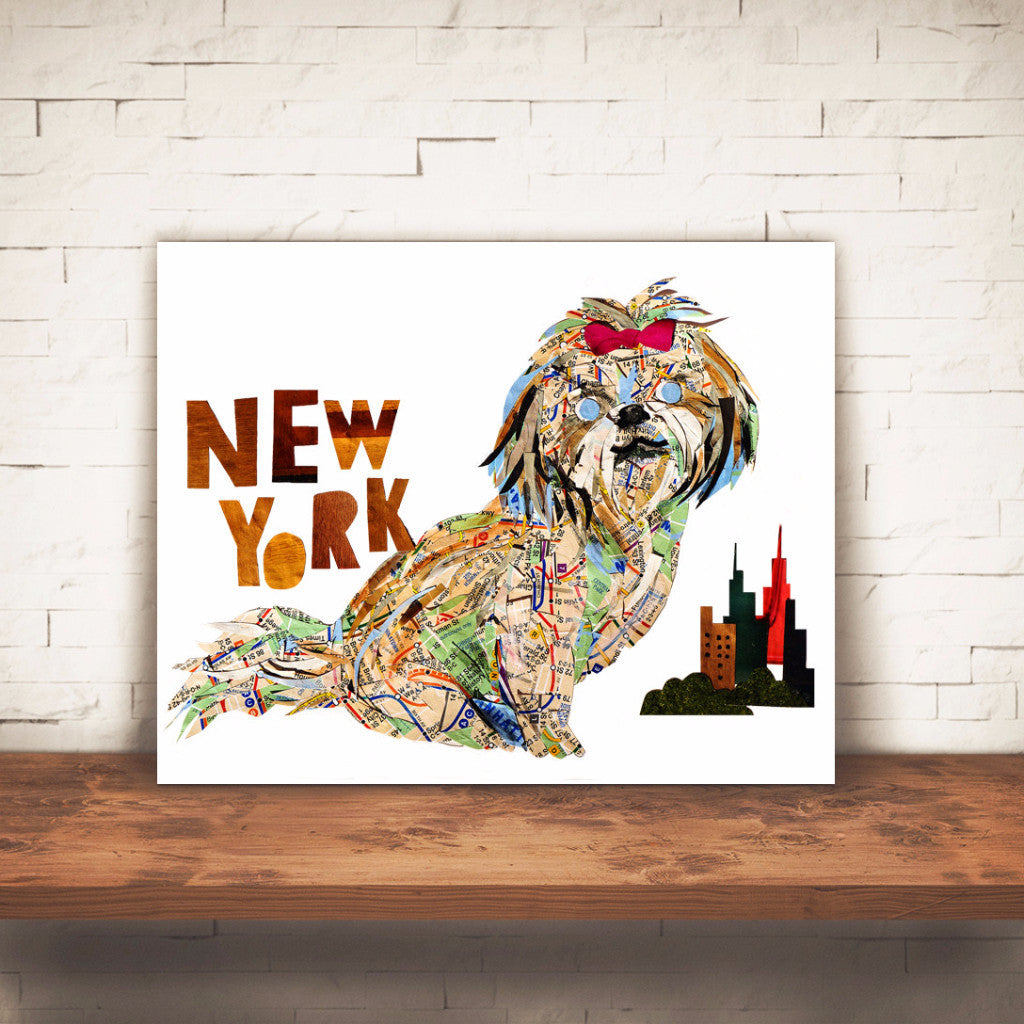 "Map dog ""New York Shih-Tzu"""