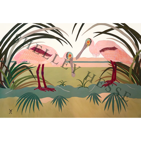 Two Roseate Spoonbills